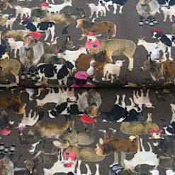 koeien schapen en meer