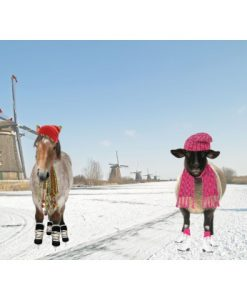 paneel paard schaap