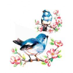 birdys-510x480